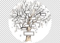 gratis-png-arbol-genealogico-genealogia-plantilla-ancestro-familia-1